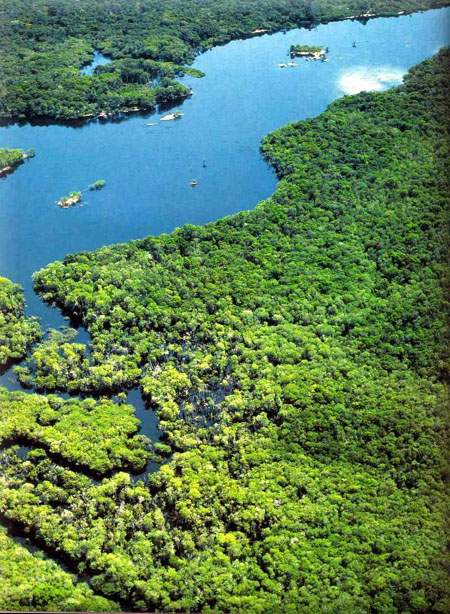 Amazônia - Parque Nacional de Jaú