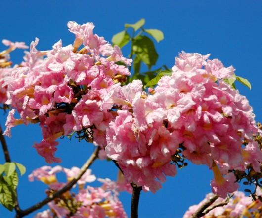A primavera chegou - Flores do Cerrado Goiano