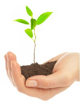 você e a sustentabilidade