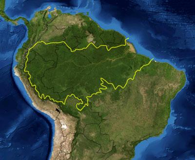Total Amazon